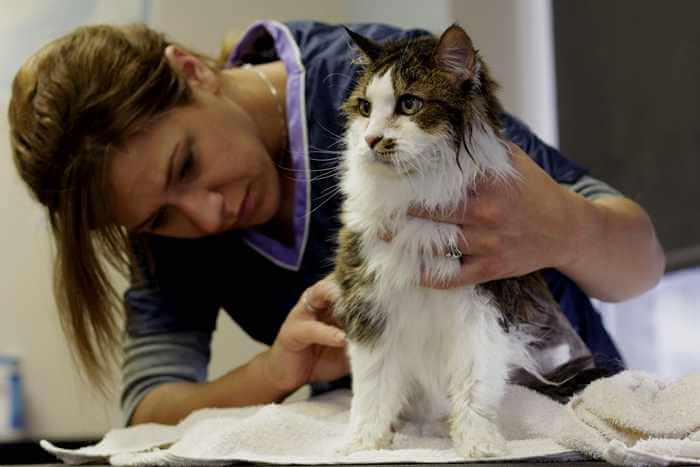 Grooming services business ideas